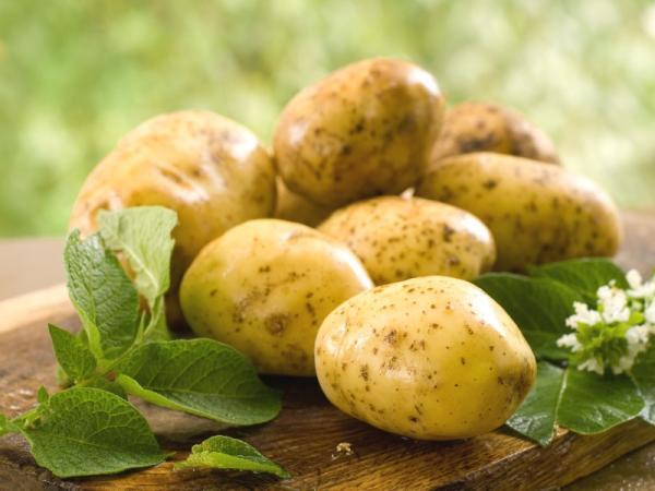 Картофель полезные советы молодой картофель на столе цветы картофеля