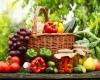 корзина фруктов овощей ягод